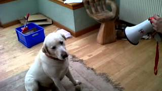 Dog Howling to Megaphone