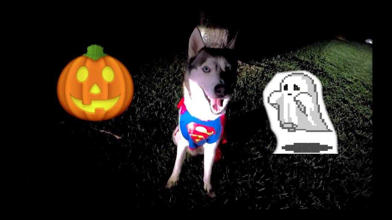 SUPER GOHAN! Halloween Day Vlog!