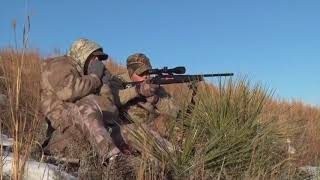 Take a Kid Coyote Hunting! Great Shot on a First Coyote!