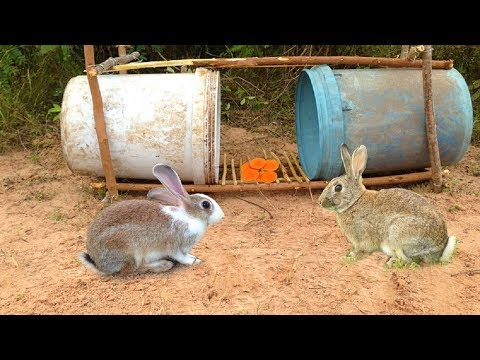 Thumbnail: Amazing Quick Rabbit Trap Using Buckets - How To Make Rabbit Trap & Plastic Buckets Work 100%