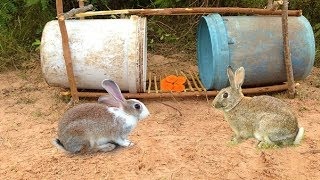 Amazing Quick Rabbit Trap Using Buckets - How To Make Rabbit Trap \u0026 Plastic Buckets Work 100%