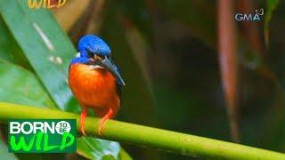 Born to Be Wild: Bird watching at Capayas Creek
