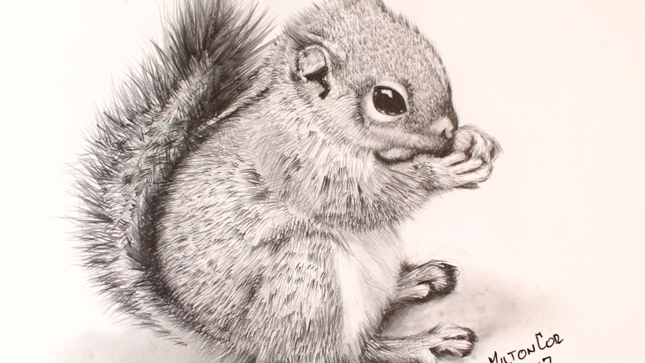 Uncategorized How To Draw A Realistic Squirrel how to draw a chipmunk youtube