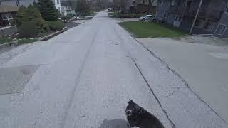 Гуляем с собаками по соседней деревне — Америка в 4К