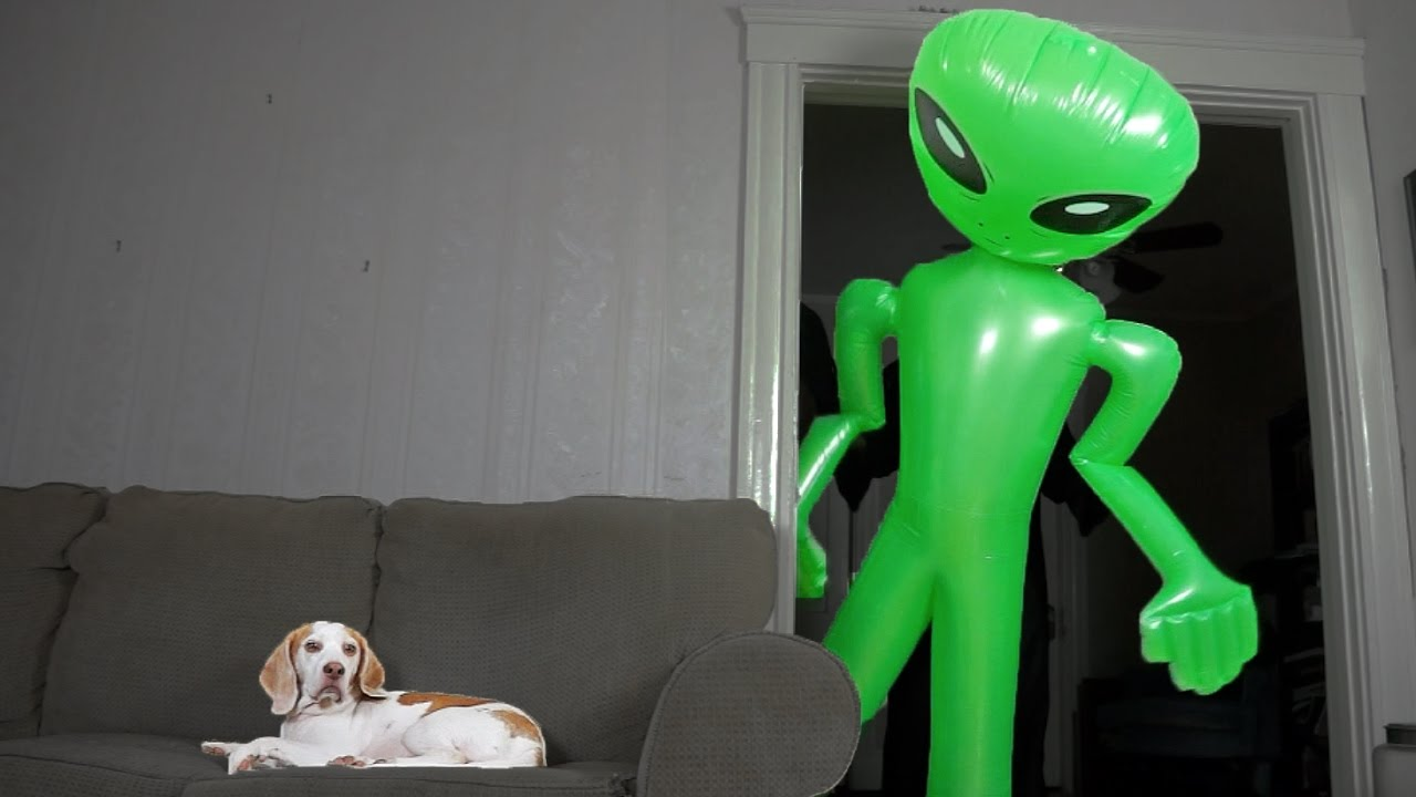Dog Unfazed by Giant Alien: Funny Dog Maymo