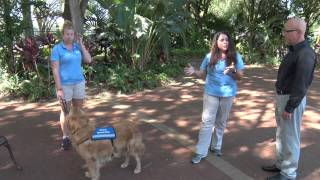 Life Unleashed - Service Dog Training