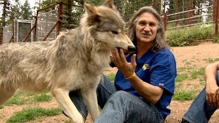Dr. Jeff Treats a Curious Wolfpack thumbnail