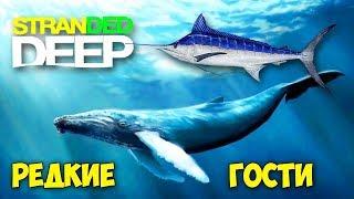 СВЕРХ РЕДКИЙ КИТ И РЫБА МЕЧ - ВЫЖИВАНИЕ - Stranded Deep #13