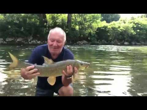 Il grande Barbo della vita ? pesca a bolognese di un Barbo gigante da 3,300 Kg.  sul fiume Oglio