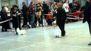 Региональная выставка собак 06.11.2010, Санкт-Петербург