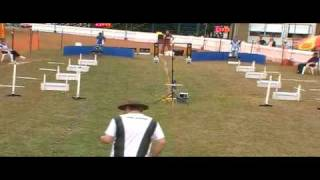 Flyball - Pine Rivers Show 1 August 2010 Race3