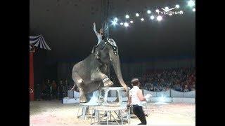 """""""Шоу слонов"""" привёз в Самару потомственный дрессировщик"""