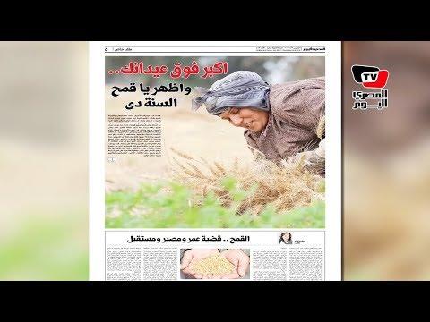 المصري اليوم:المصري اليوم تكشف كواليس تسويق الفلاحين لمحصول القمح بمحافظات الدلتا