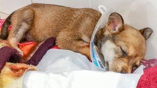 Едем в деревню чтобы отвезти щенка в клинику Щенок пожаловался на недомогания Только не плачь