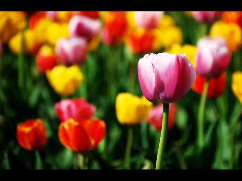 Αποτέλεσμα εικόνας για اجمل زهور في العالم