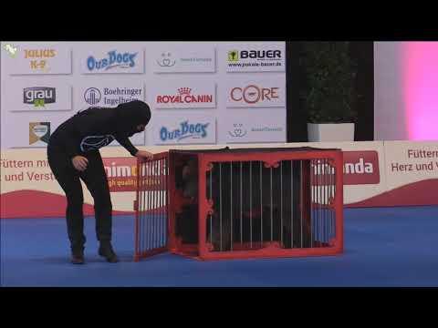 FCI Dog Dancing World Championship 2017 Final Freestyle 5 st place Thunder and Chiara Meccoli