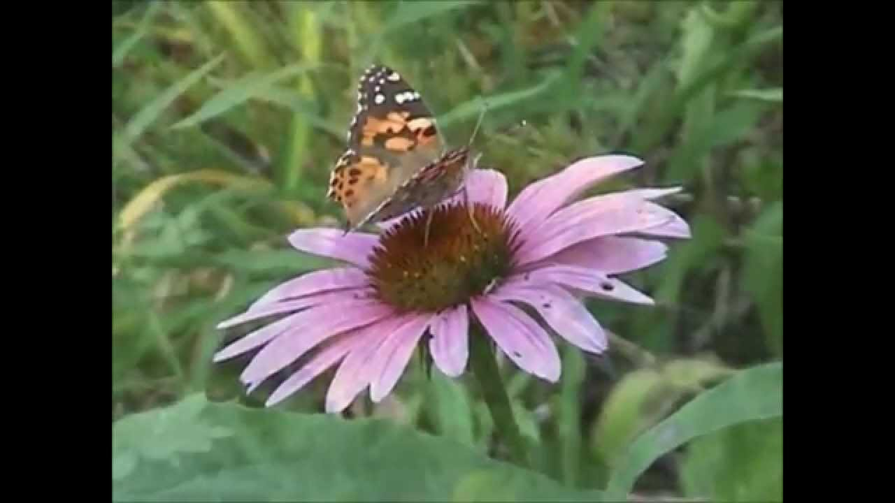 new jersey highlands - native plants and their habitats