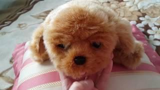 Щенок моей мечты - Little live pets Snuggles