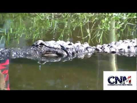 Aligator in 1080P HD by John D. Villarreal