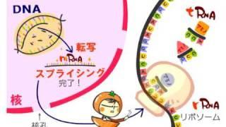生物Ⅱ タンパク質の合成 by WEB玉塾