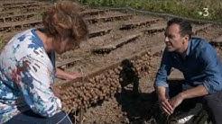Découverte de l'élevage 'Les Escargots de l'Odon' par Laurent Lévêque