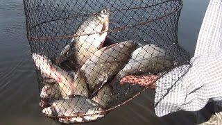 Рыбалка Десна | Много рыбы | Белые Грибы | Купание(Рыбалка Десна | Много рыбы | Белые Грибы | Купание., 2016-07-15T11:48:36.000Z)