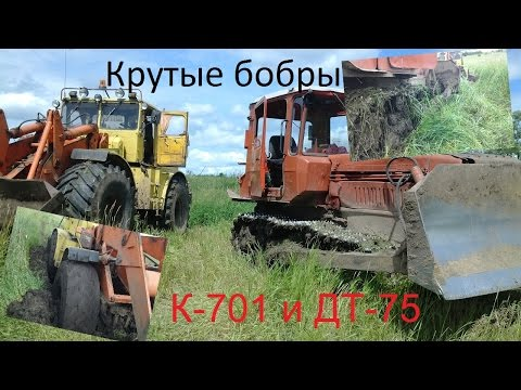 Крутые бобры или покатухи на К-701 и ДТ-75. Angry Beavers pokatuhi or K-701 and DT-75
