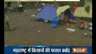 Heavy rains damage Maharashtra farmlands, Govt stand helpless