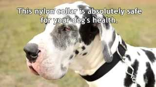 2 Ply Wide Nylon Dog Collar For Walking And Basic Training