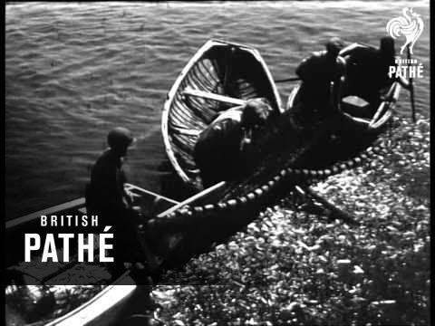 Sardine Fishing (1947)
