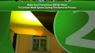 Mold Removal Local Experts and Professionals