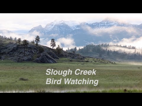 Repeat Bird Watching on Slough Creek - Yellowstone National