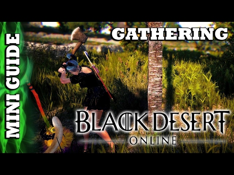 Black Desert Online - Mini Guide - Gathering