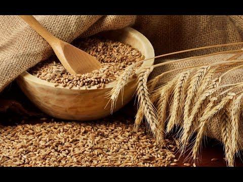 Рынок пшеницы-2018. Засуха,