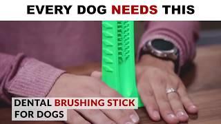 Dog Toothbrush Stick 2019