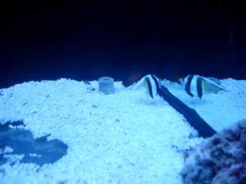 фото морские аквариумы
