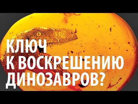 КЛЮЧ К ВОСКРЕШЕНИЮ ДИНОЗАВРОВ? Ярослав Попов   Палеонтологические истории #006