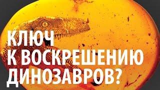 КЛЮЧ К ВОСКРЕШЕНИЮ ДИНОЗАВРОВ? Ярослав Попов | Палеонтологические истории #006