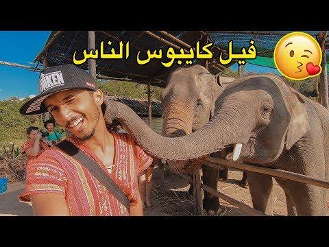 أغرب فيل شفتو فحياتي كايبوس الناس 😂