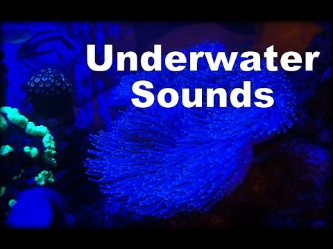 ASMR - Live Binaural Aquarium /  Leather Coral - 1 Hour