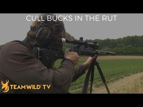 Roebuck Hunting With Ian Harford: Cull Bucks In The Rut