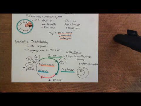 Cancer Development Part 4