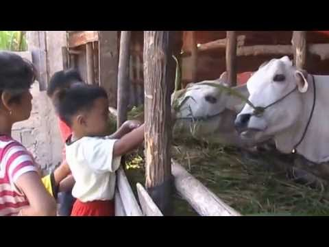 Cow Video and Children [More Fun Play Kids Outdoor]-SMART kids playtime
