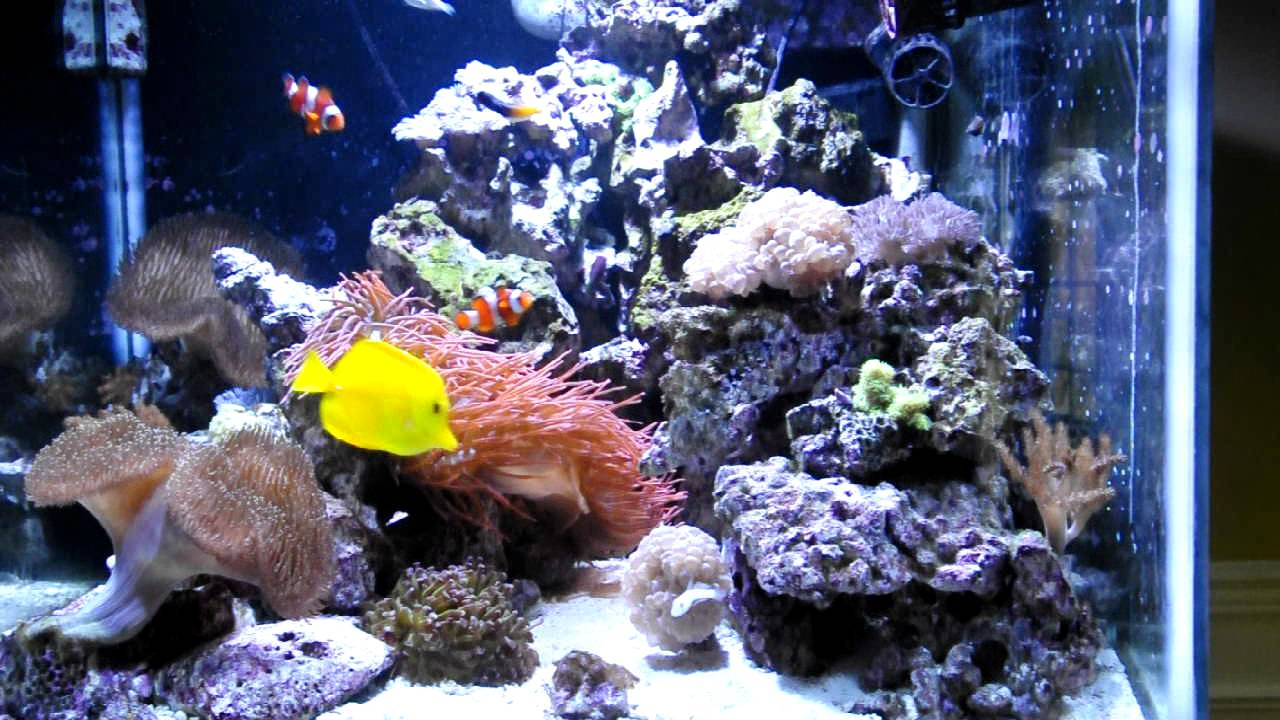 Reef tank 100 gallon cube youtube for Cube saltwater fish tank