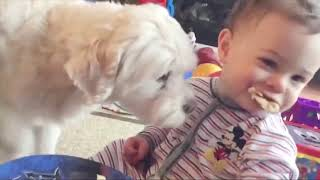 Funny Baby and Dog Trolling Together - Funny Fails Baby and Pet