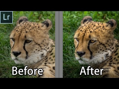 How To Edit Wildlife Portraits - Lightroom Wildlife Photography Editing Tutorial