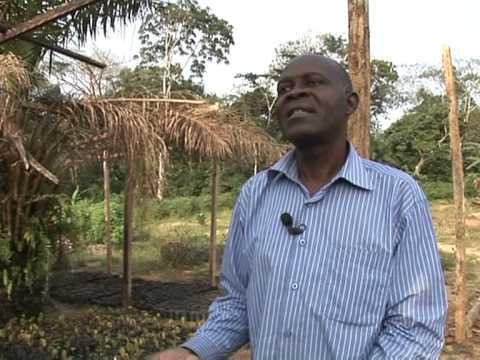 Le Cameroun tente de relancer sa production de cacao