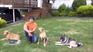 Dog Training Brisbane - Train Your Dog Quick And Easy