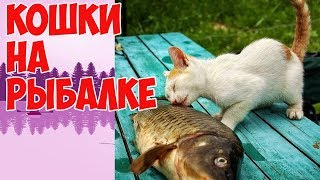 Весёлые картинки. Кошки на рыбалке.Cheerful picture. Cats fishing.