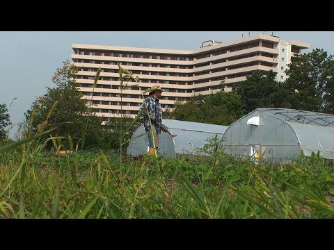 Toronto and Region Conservation Authority (TRCA) - Urban Agriculture Program
